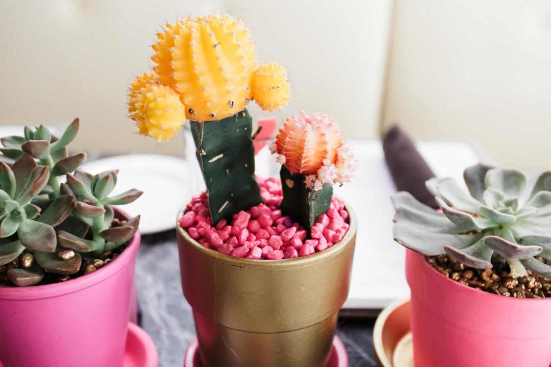 Succulent table arrangement