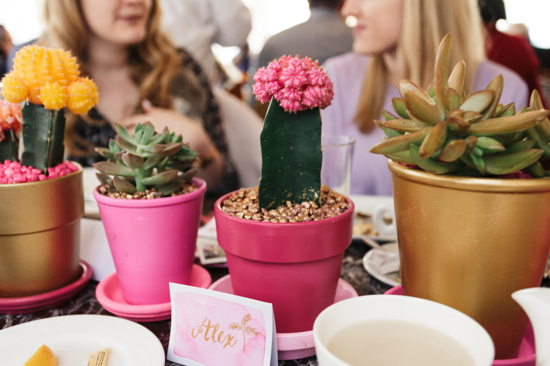 DIY colorful succulents